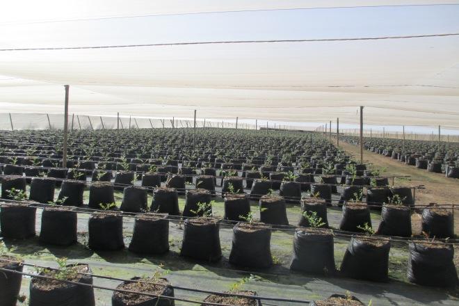 manejo de contenedores, una alternativa viable para plantar